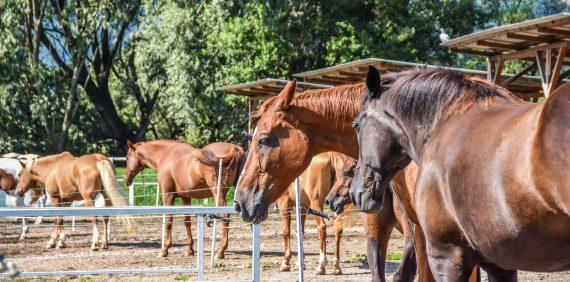 Vendita cavalli