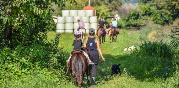 Passeggiata con pony